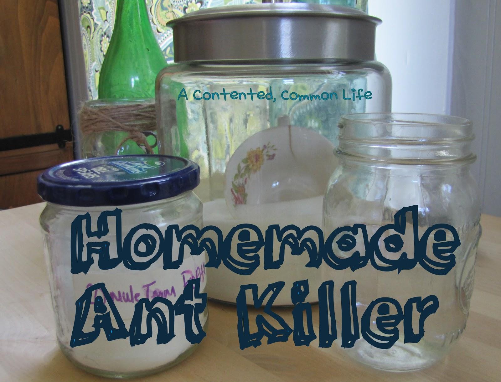 natural ant killer for kitchen - zitzat