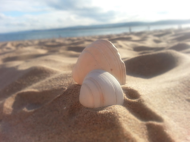 Two shells on a sandy beach