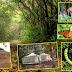 Phansad Wildlife Sanctuary. Murud, Raigad