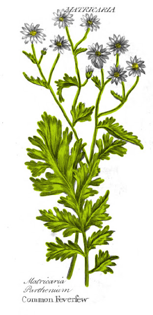 Colonial Herbs and Uses