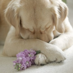 A Disheartened Puppy - Annie Many