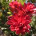 Mulai Dari Cantigi, 6 Tanaman Gunung yang Tak Kalah Cantik Dari Edelweiss