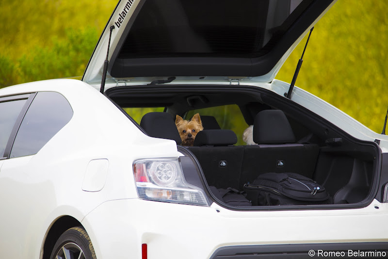 Henry and Charlie Road Trip Pet-Friendly Vacations Tips for Traveling with Dogs