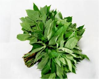 Image result for daun singkong muda