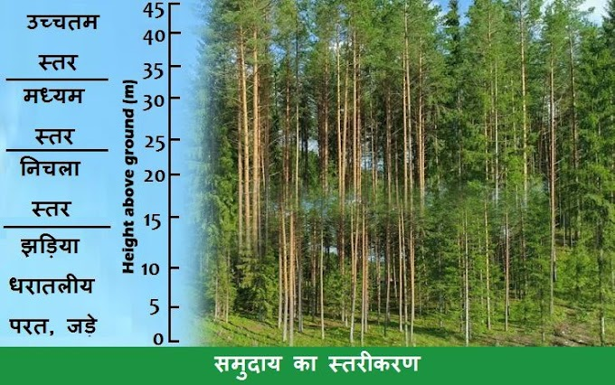 पारिस्थितिकी (Ecology) - Paristhitiki की परिभाषा, कारक, नियम आदि