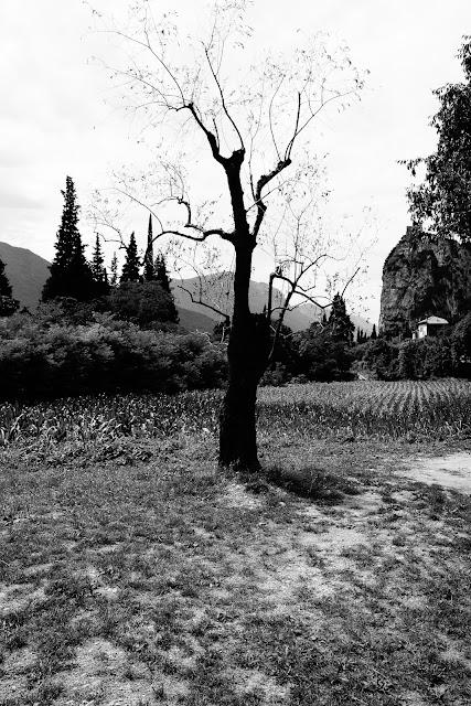 Drzewo. Koncepcyjna fotografia abstrakcyjna. Zdjęcie czarno-białe. Arco, Trentino, Italy. fot. Łukasz Cyrus