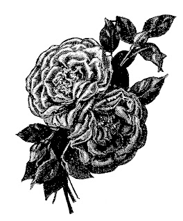 rose flower illustration image transfer drawing artwork digital