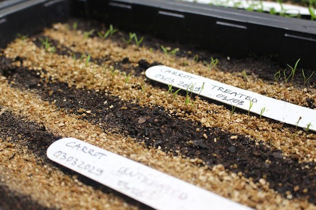 Optigrow carrots germination vs usual seed