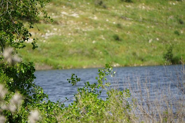 מאגר גלעד עם מים