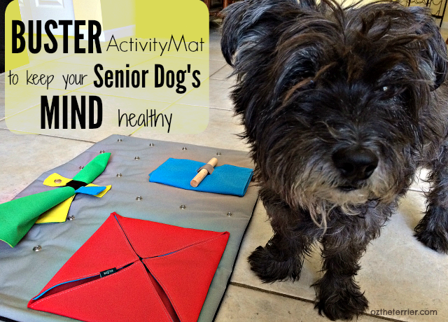BUSTER ActivityMat to Keep your Senior Dog's Mind Healthy