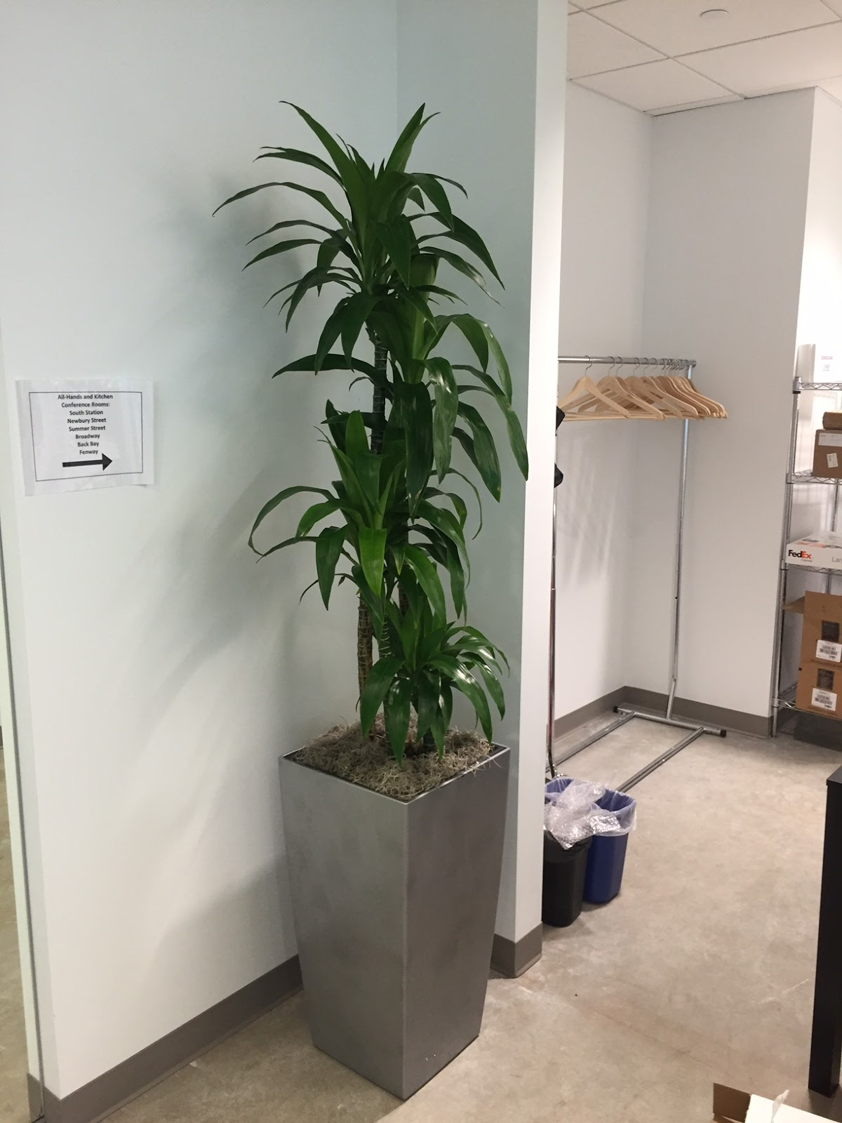 Boston Ma Tall Narrow Medium Light Loving Office Plants