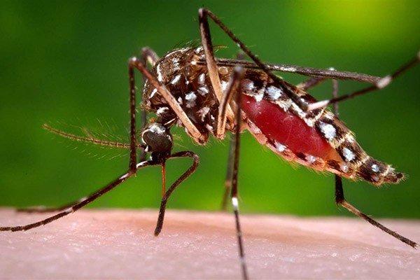 Cose da sapere sulla malattia del Virus Chikungunya trasmessa dalla Zanzara Tigre