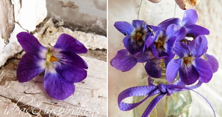 Ideas And Inspirations Schmetterlinge Und Veilchen Butterflys