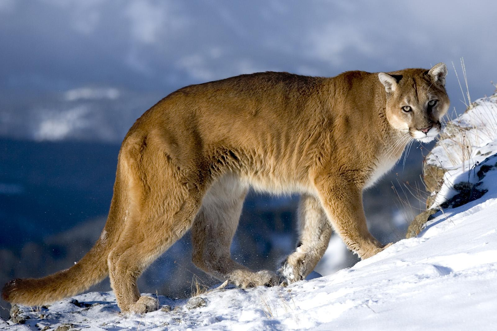 Amazing Wildlife New Photos