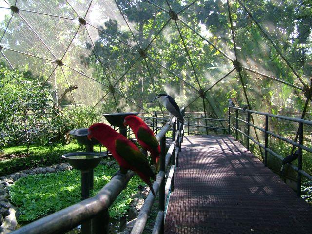 Orange Breasted Sparrow Make It Davao: Malagos...