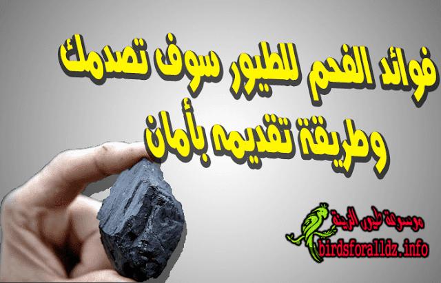 فوائد الفحم لطيور الزينة وطريقة تقديمه بأمان