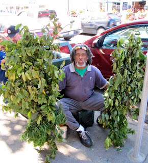 Bushman San Francisco California USA