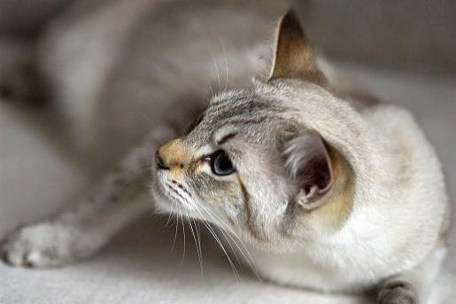 Gdy kot traci słuch