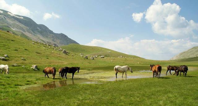 Στα βουνά της Πίνδου καλπάζουν αγέρωχα περίπου 3.200 άλογα