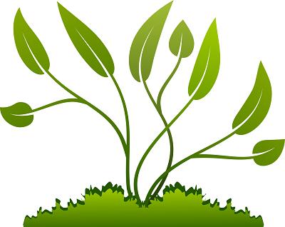 Materi Pertumbuhan dan Perkembangan Tumbuhan (Rangkuman SBMPTN)