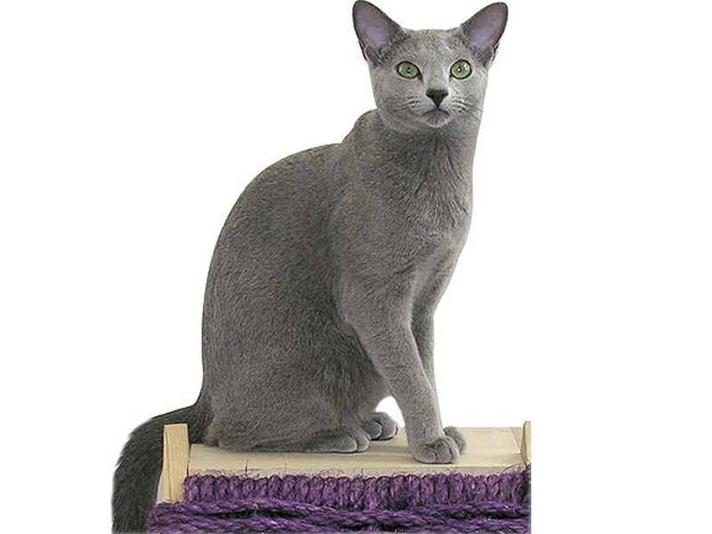 My Cat Kucingku Yang Lincah Dan Menggemaskan