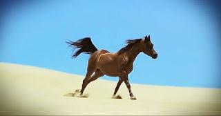 Lassított kamerával vették fel a lovakat. Amit látni fogsz, az valami lenyűgöző /VIDEÓ/