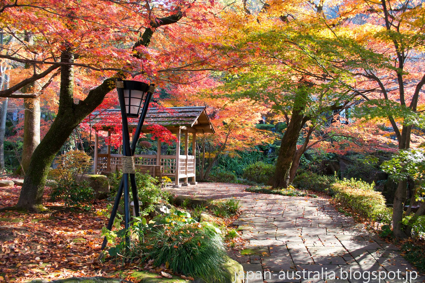 Autumn Colours at Gifu Park