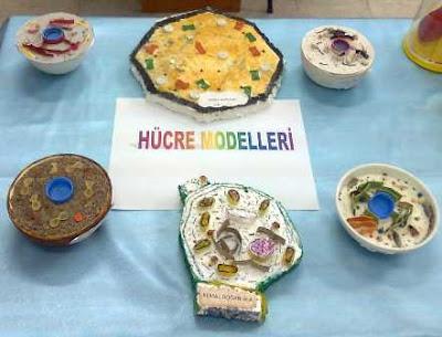 Hucre-Modeli-Ornekleri