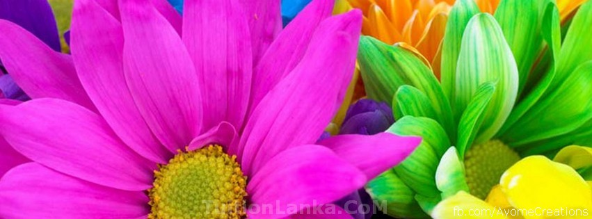 Floral Facebook Covers: Ayome Creation: Flower FB Covers