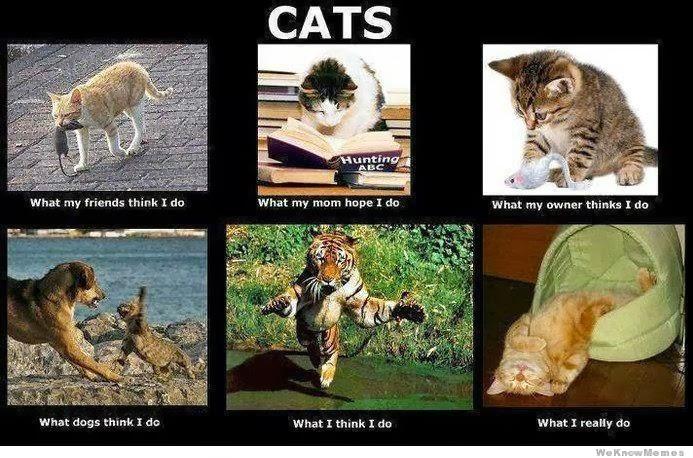 CatLOLious Meme Jokes - For Fum And Interesting Articles ...