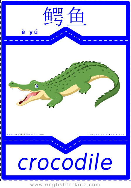 Crocodile - English-Chinese flashcards for wild animals topic