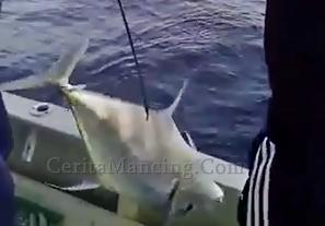 Mancing Slow Jigging Strike Ikan Cermin