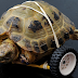 Vince la tortuga que vuelve a caminar