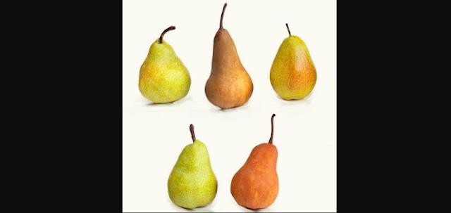 Sangat Mudah Menanam & Merawat Pohon Pear
