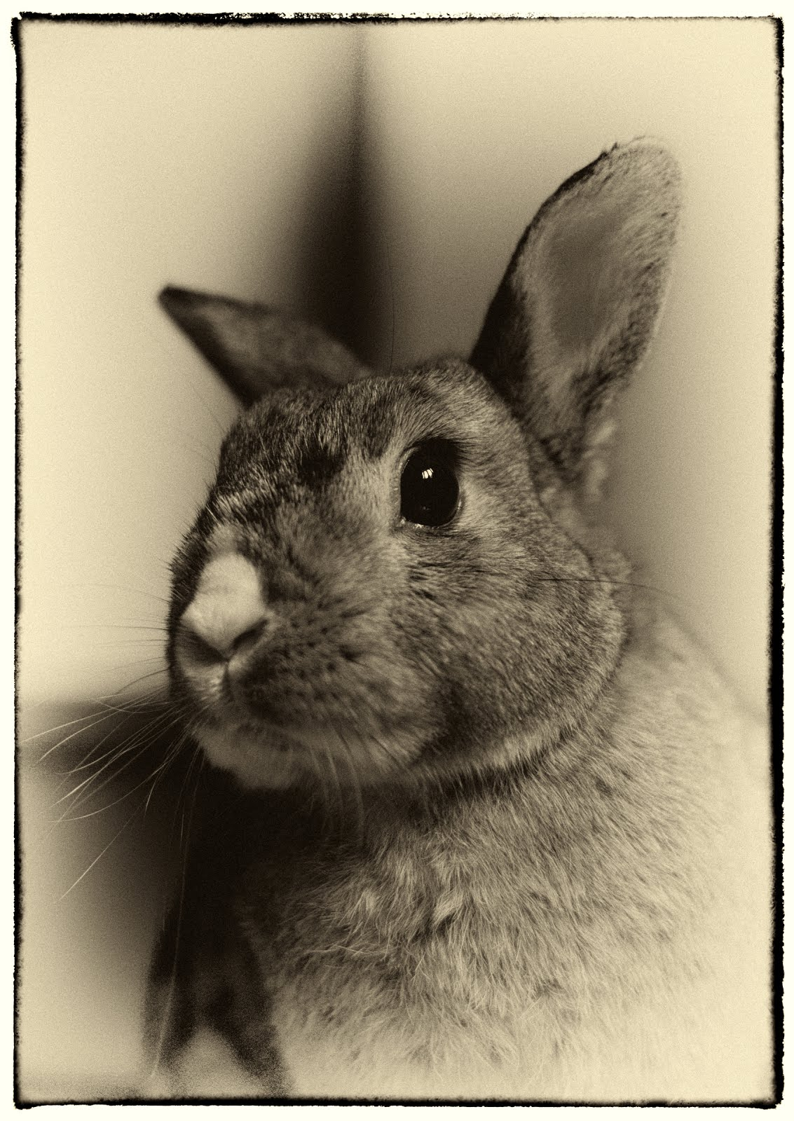 The Vintage Bunny