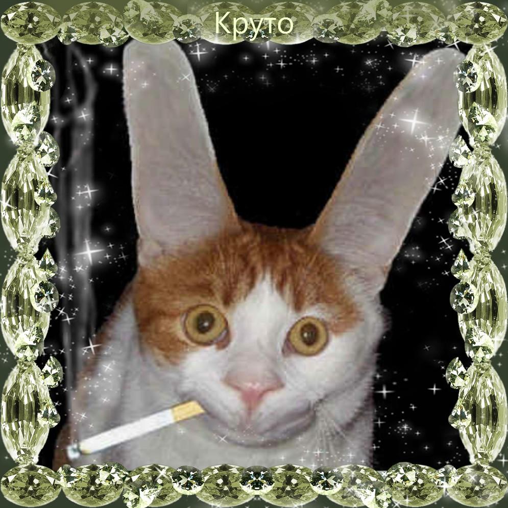 Пример изображения кота в рамке с добавлением надписи на картинке