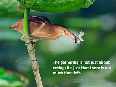 Beautiful Learning to love Quotes: the gathering is not just about eating; it's just that there is not much time left.
