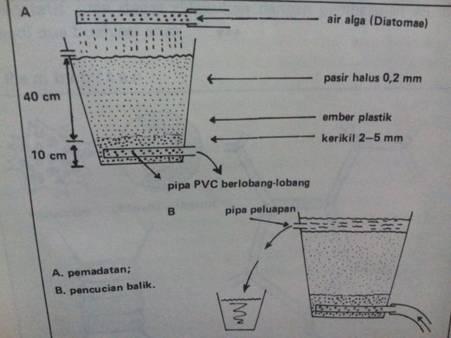Budidaya Diatomae