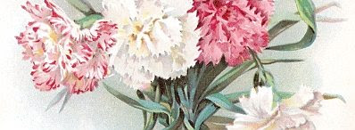 Detail from 'Carnations' by Frances Walker