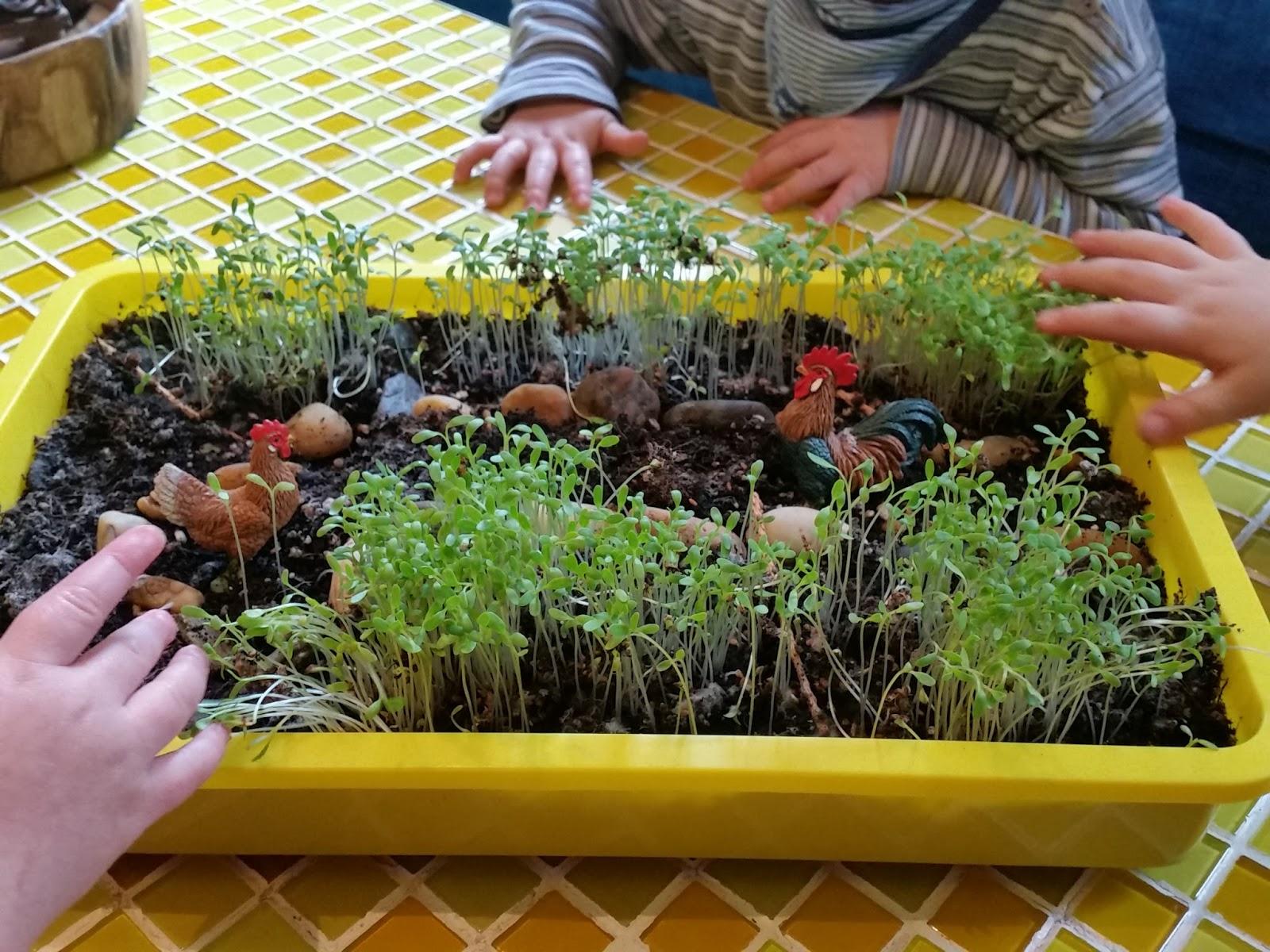 BARFUSS IM GRAS: News aus dem Minigärtchen