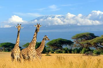 honeymoon destinations - kenya