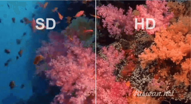 Perbedaan kualitas Video SD dan HD - riswan.net