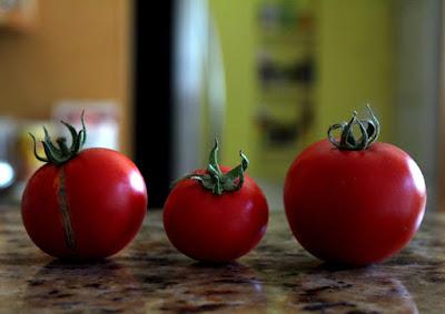 Tomato Season Recipes