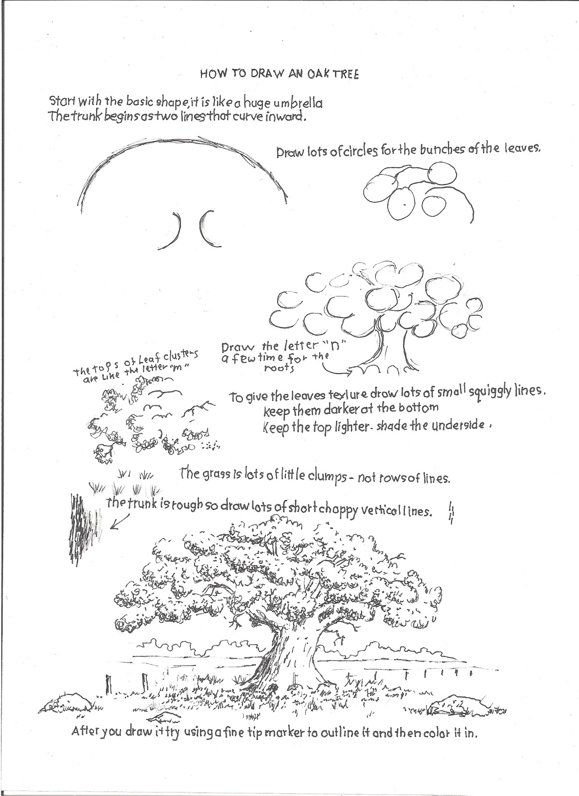 How to Draw Worksheets for The Young Artist: How to Draw an Oak ...
