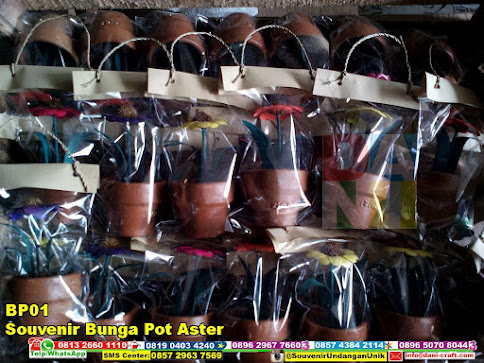 jual Souvenir Bunga Pot Aster