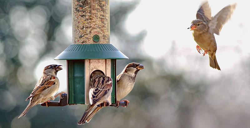 Comment transformer votre jardin en refuge pour oiseaux ?