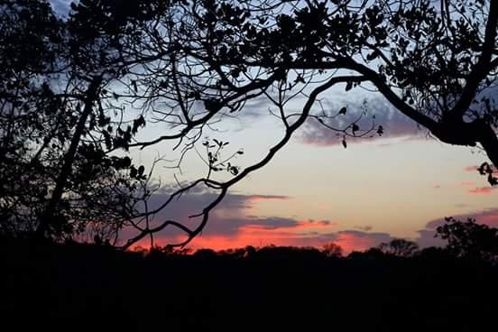"""Resultado de imagem para belas paisagens de taquaritinga do norte"""""""