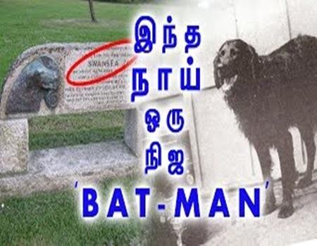 SuperHero Dog! BAT-MAN