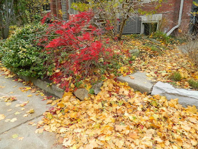 Riverdale Fall Cleanup Front Garden Before by Paul Jung Gardening Services--a Toronto Gardening Services Company
