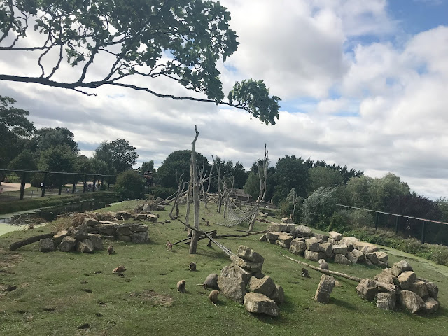 baboon enclosure flamingoland
